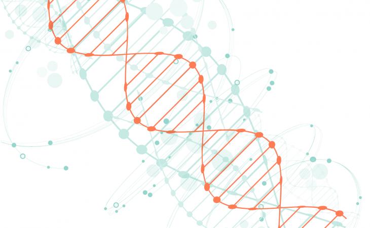 ADN - copie