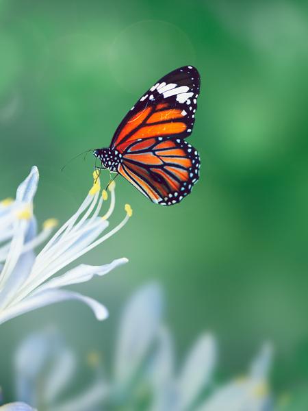 « Ce que la chenille appelle fin du monde, le reste du monde l'appelle papillon. » Lao Tseu