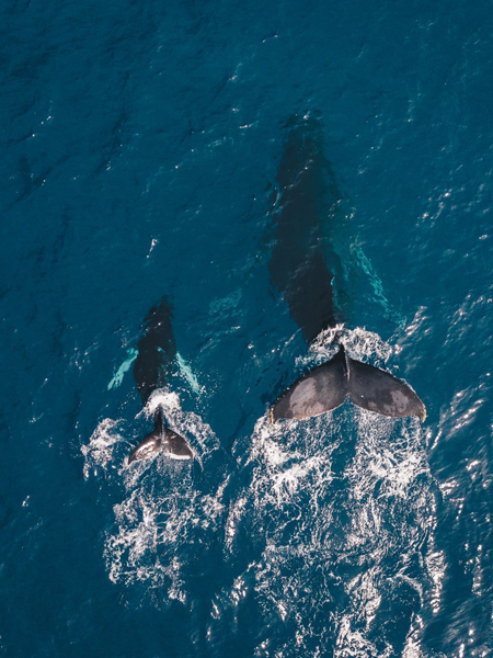 Pour voyager très loin il faut y aller collectivement comme les baleines et les oiseaux migrateurs.
